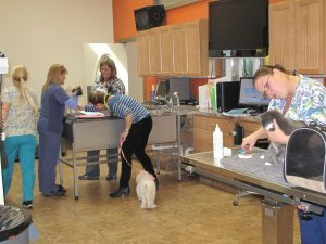 Medical Pet Care In Millersville Md Noah S Ark Veterinary And